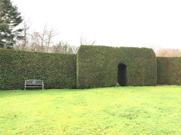 yew-hedge2