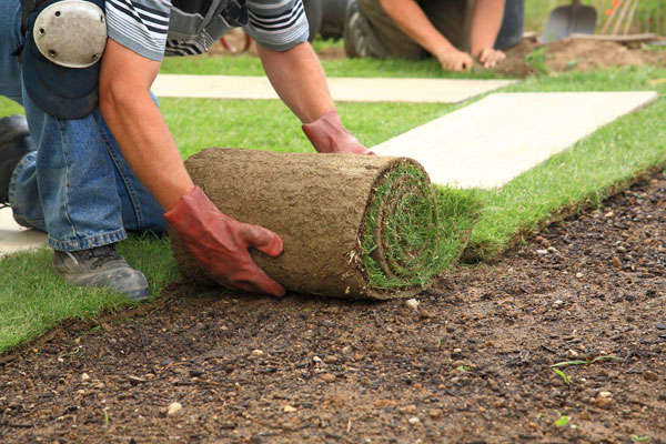 Laying turf